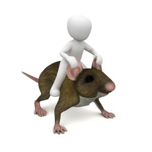 Take control of vermin with Pest control services